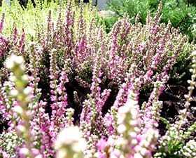 Ogród w Rembertowie – realizacja